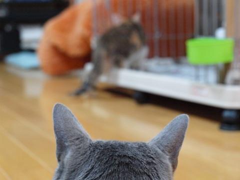 アレなで03(2012.07.04)