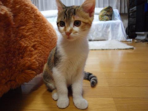アレなで05(2012.07.04)
