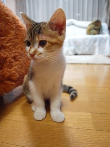 初日の撫子さん(2012.06.23)