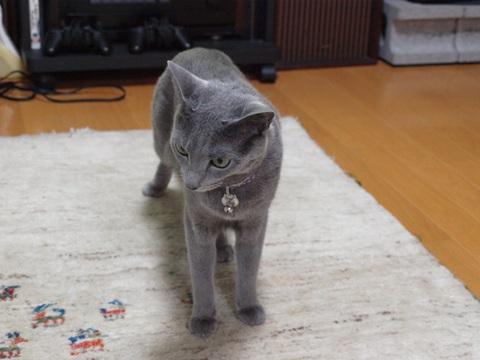 かくれんぼ?05(2012.07.10)