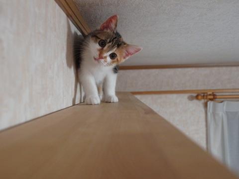 あたち、ここシュキ!02(2012.07.12)