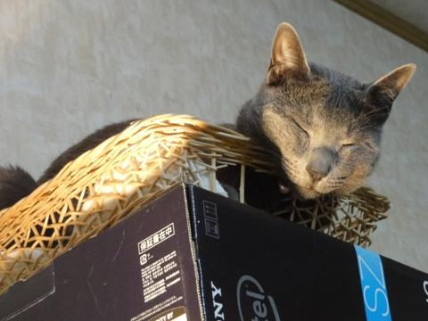 猫神様02(2012.07.14)