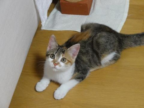 撫子さん(2012.07.26)