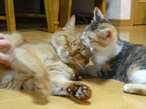 ジョゼ嬢と撫子さん(2012.07.26)