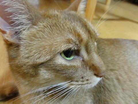 ジョゼ嬢、快方へ02(2012.07.30)