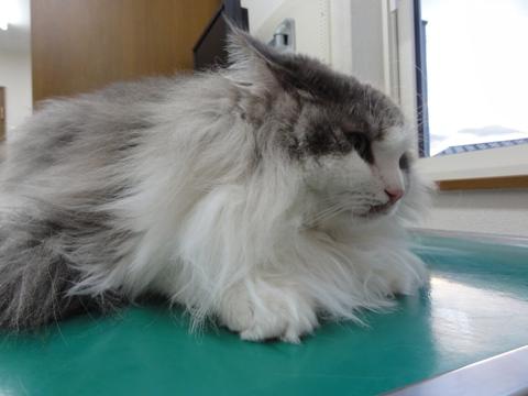 病院のフレさん(2012.08.03)