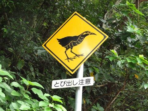 ヤンバルクイナに注意!(2012.08.10)