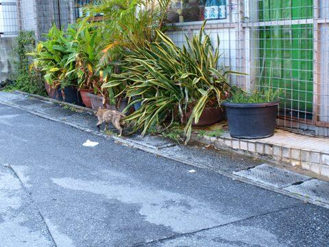 沖縄のねこさん02(2012.08.10)