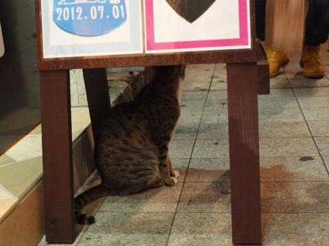 沖縄のねこさん05(2012.08.10)