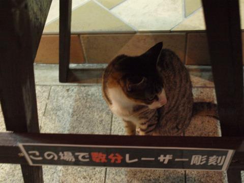 沖縄のねこさん06(2012.08.10)
