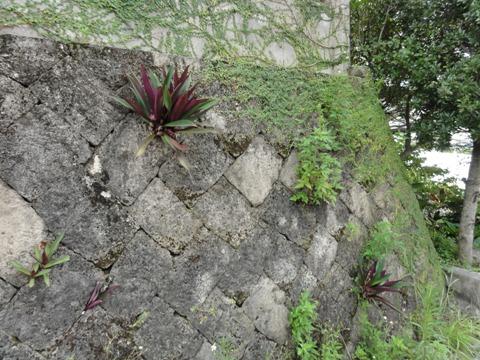 石垣(2012.08.11)