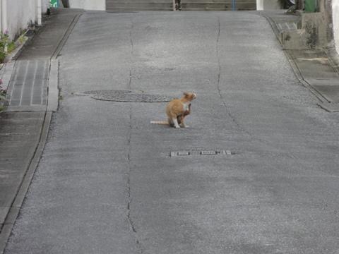 沖縄のねこさん03(2012.08.10)