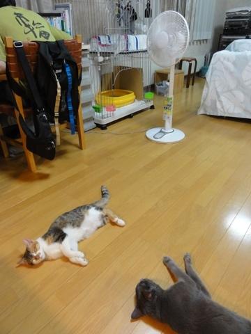 ごろんごろん02(2012.08.25)