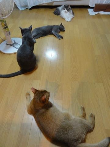 いきだおれだち(2012.08.27)