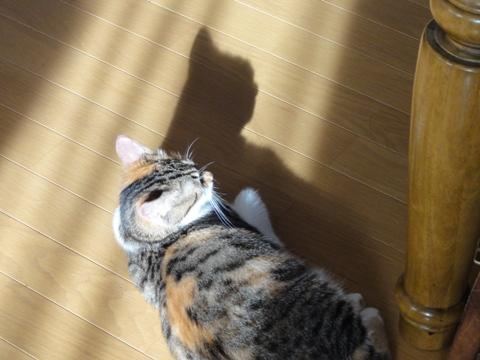 ちっちゃい猫神様01(2012.08.30)