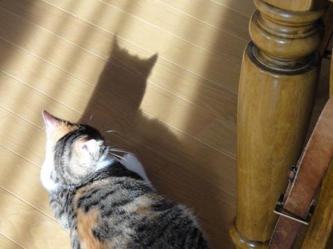 ちっちゃい猫神様02(2012.08.30)