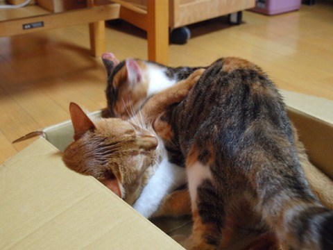 師匠と弟子01(2012.09.03)