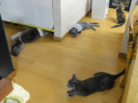 扇風機スキ~♪(2012.09.10)