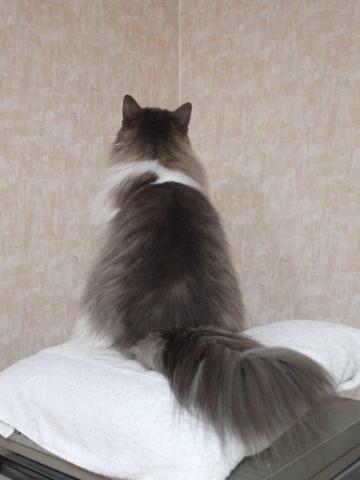 フレイヤちゃん(2012.09.19)