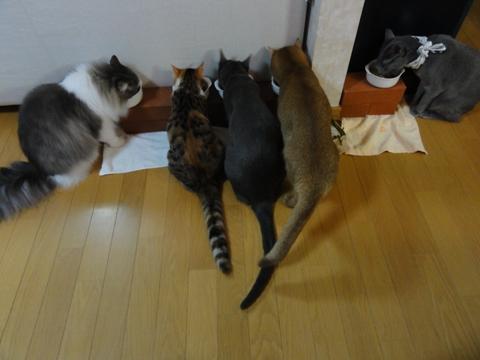 お食事タイム(2012.09.21)