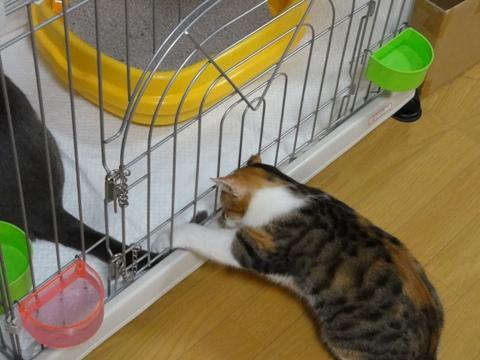 おにーにゃんのしっぽさん01(2012.09.25)