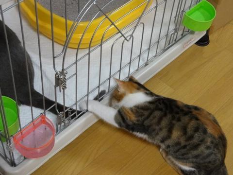 おにーにゃんのしっぽさん02(2012.09.25)