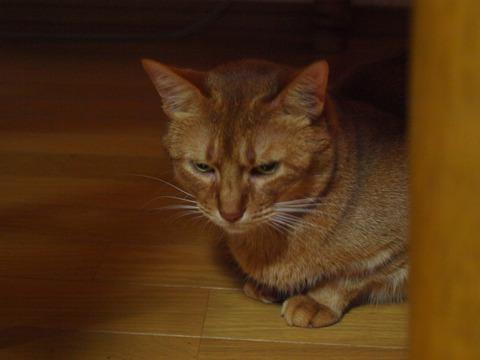 ジョゼ嬢(2012.09.29)
