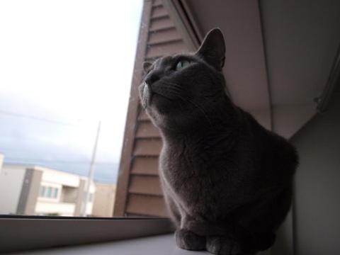 イケニャン?02(2012.10.24)