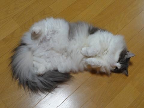 ぴくっ むくっ01(2012.11.09)