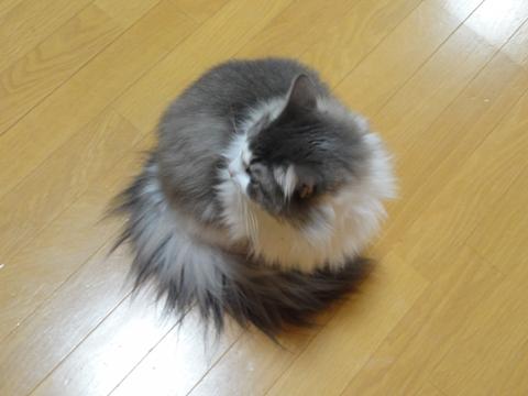 ぴくっ むくっ03(2012.11.09)
