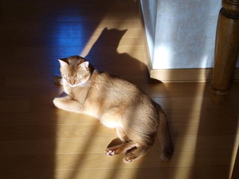 ジョゼ嬢の猫神様(2012.11.11)