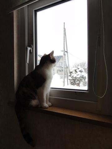 除雪見物01(2012.12.02)