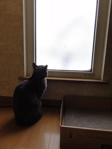 除雪見物03(2012.12.02)
