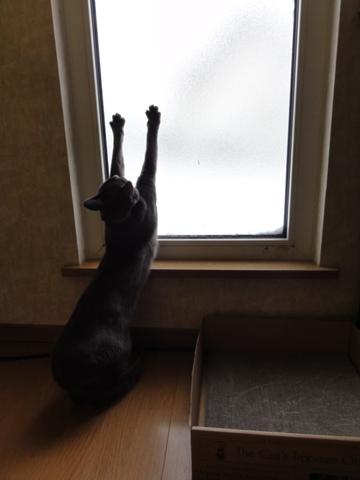 除雪見物05(2012.12.02)