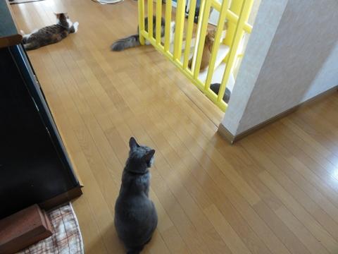 全にゃん集合02(2012.12.02)