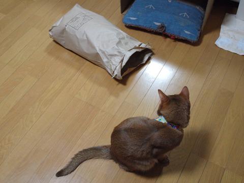 気配02(2012.12.03)