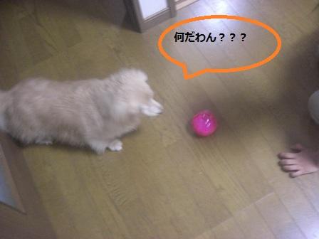 20120510022.jpg