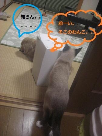 201205170111.jpg