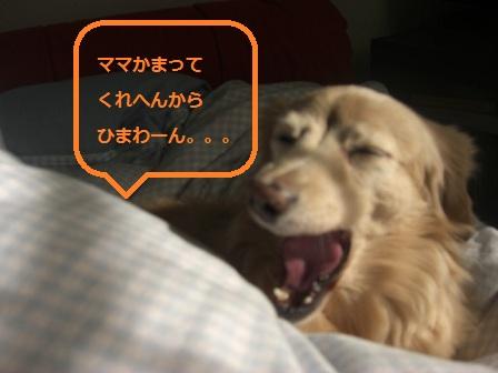 20121025009.jpg