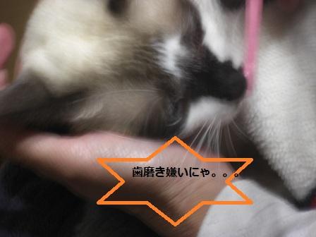 20121031012.jpg