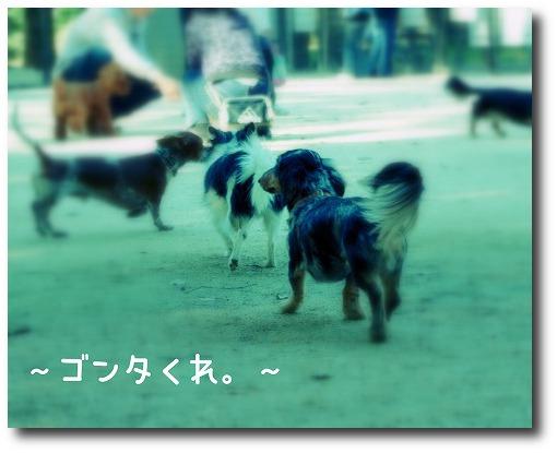 IMGP4354.jpg