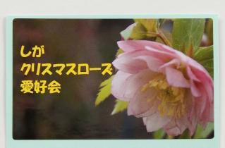 IMG_2006 (319x210)