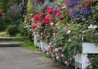 No12 駐車場脇の鉢植え花壇のバラ達 (850x602)