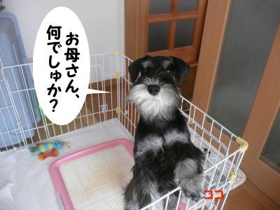 雅っ子ココ4月11日