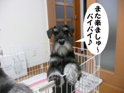 雅っ子ココ4月23日2