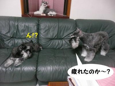 GO&雅っ子アンアン4月26日1