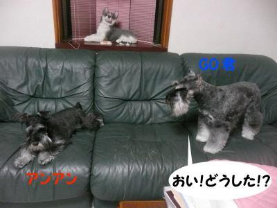 GO&雅っ子アンアン4月26日