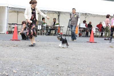 2011.10島根ショーJクラス3