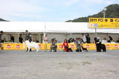 2011中国インター グループ1