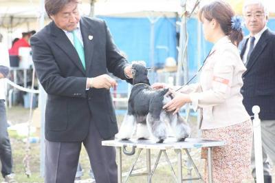 短犬種展ことね  (59)